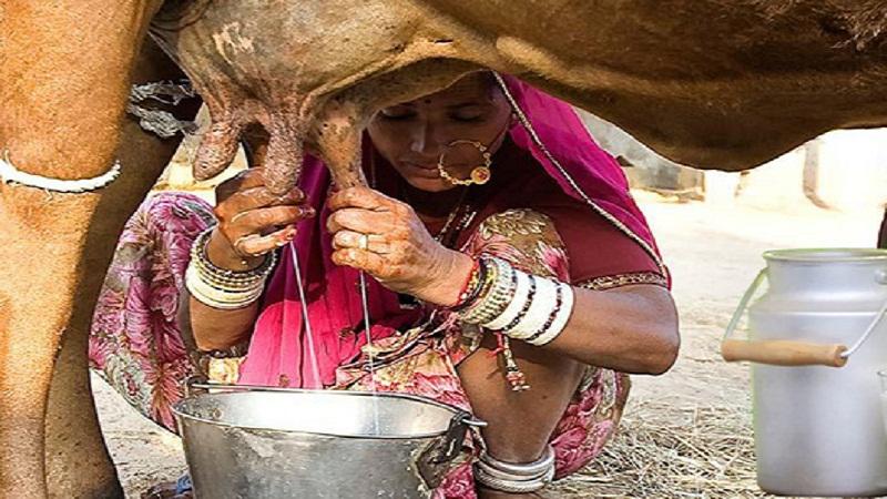 मध्यप्रदेश के इस गांव में सभी को मुफ्त बांटा जाता है दूध और दही, बड़ी रौचक है इसकी यह वजह..