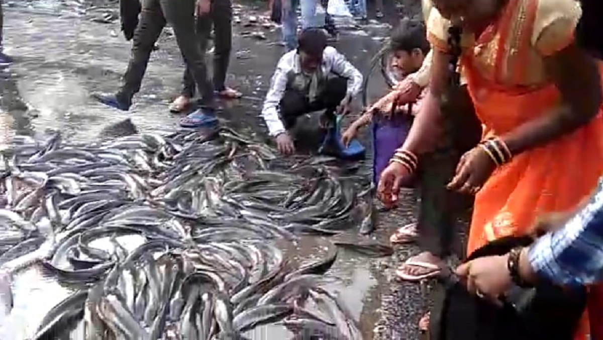 People engaged in collecting fish on the road due to overturning of trucks in Kanpur