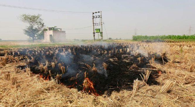 यूपी सरकार पराली पर सख्त, 178 किसानों पर FIR, 7 लेखपाल निलंबित