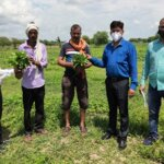 किसानों के बीच पहुंचे कृषि वैज्ञानिक, सर्वे कर सौंपे उन्नतिशील प्रजाति के पौधे
